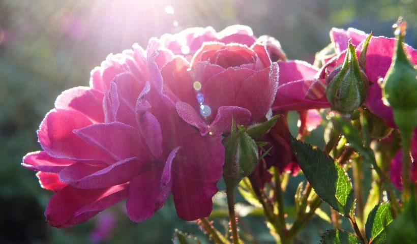 Blüten, Tod, Trauer, Sterben, Leben